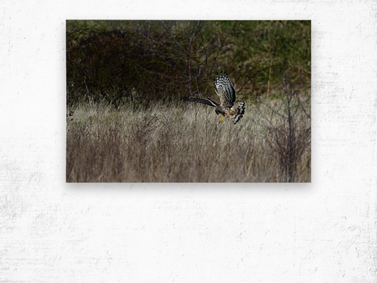 Wesley Allen Shaw 01906 1609735001.972 Wood print