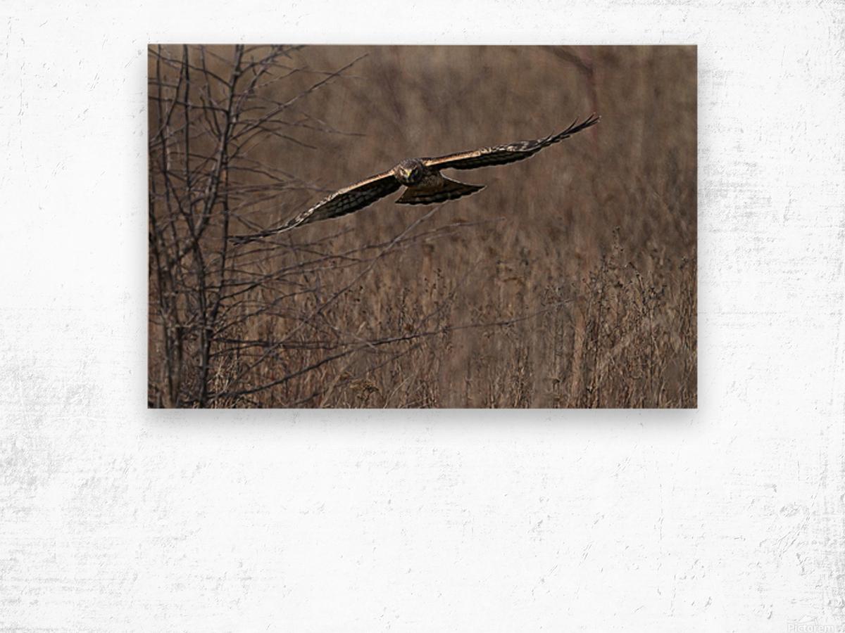 Wesley Allen Shaw 02102 1609734999.9044 Wood print