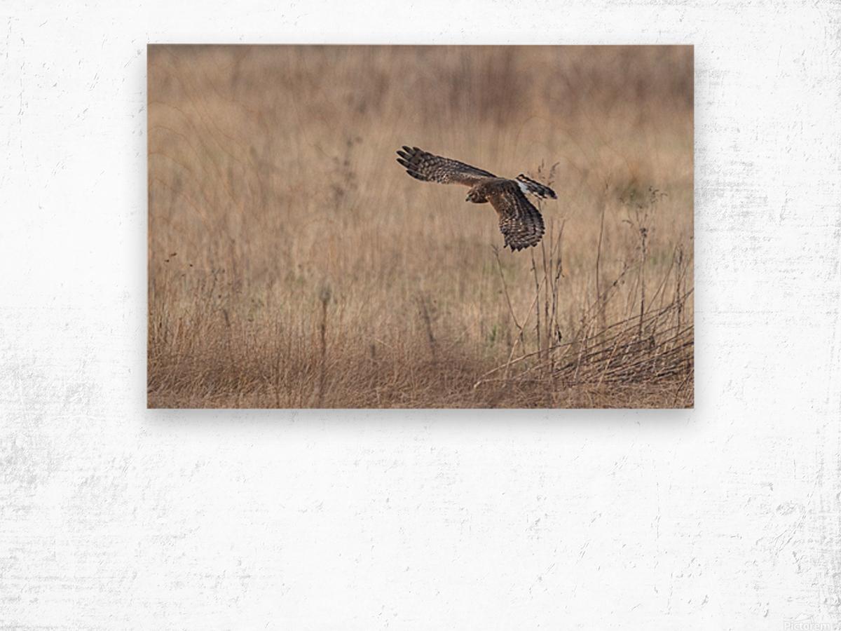 Wesley Allen Shaw 09335 Wood print