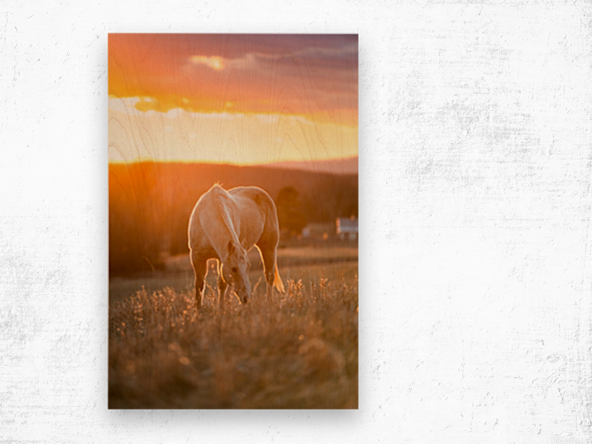 White Horse at Sunset Wood print