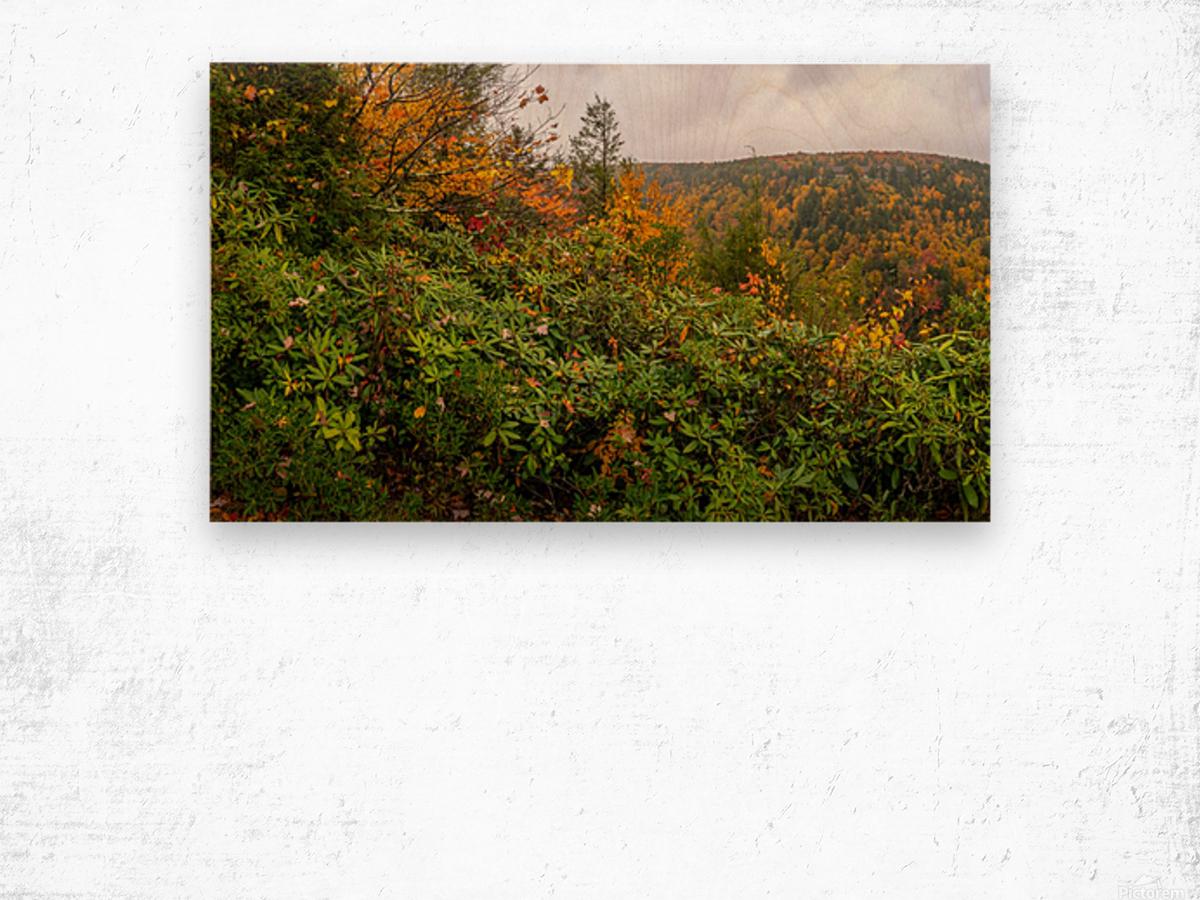 Blackwater Gorge apmi 1896 Wood print