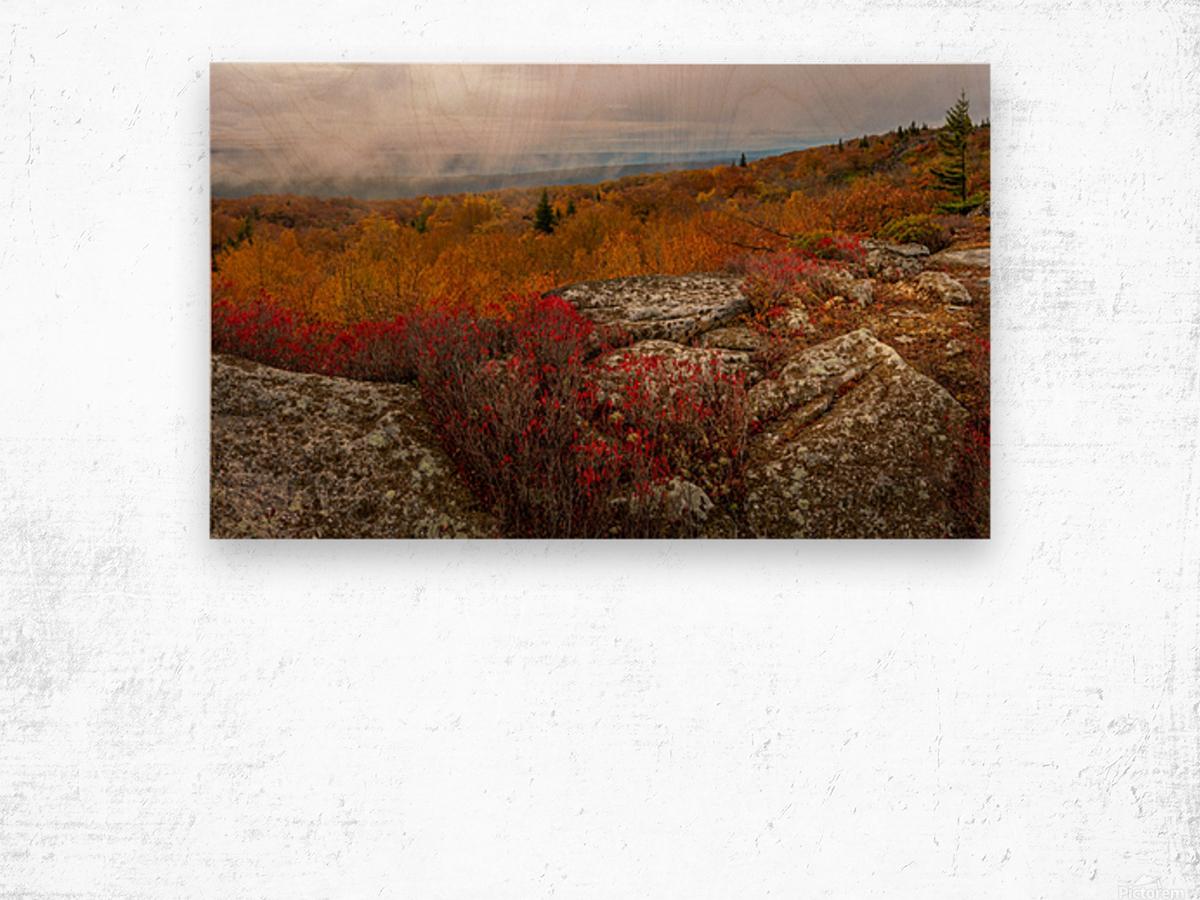 Colors of Nature apmi 1795 Wood print