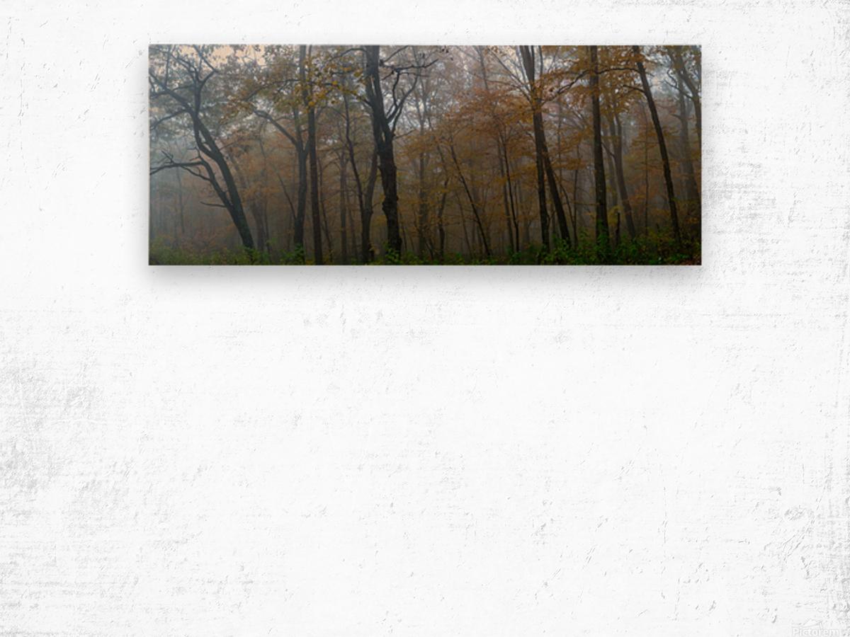Treeline apmi 1867 Wood print