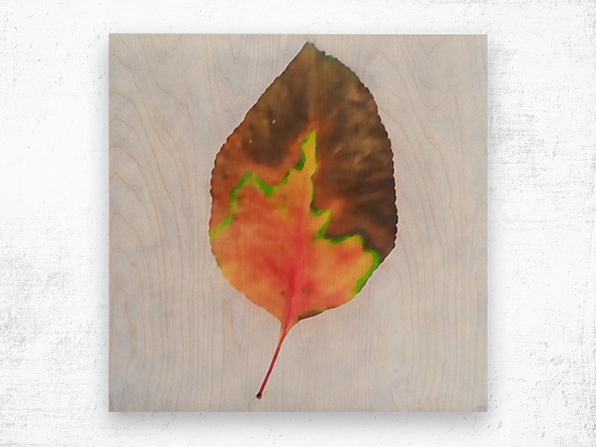 snow leaf Wood print