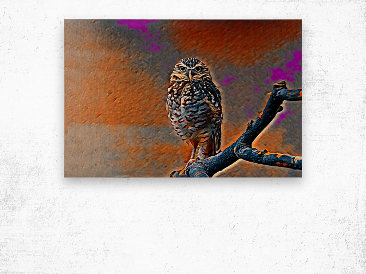 OWL - Stylized Wood print