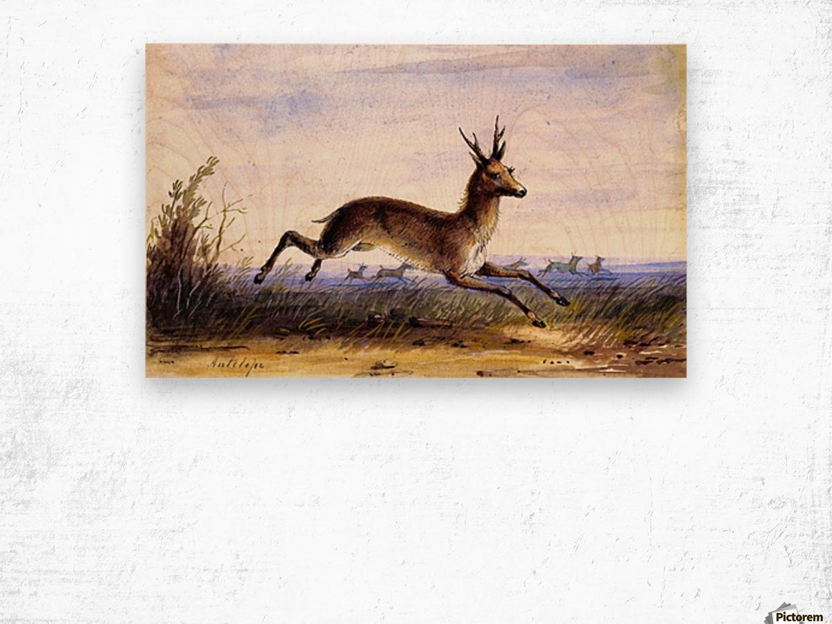 Antelope running Wood print