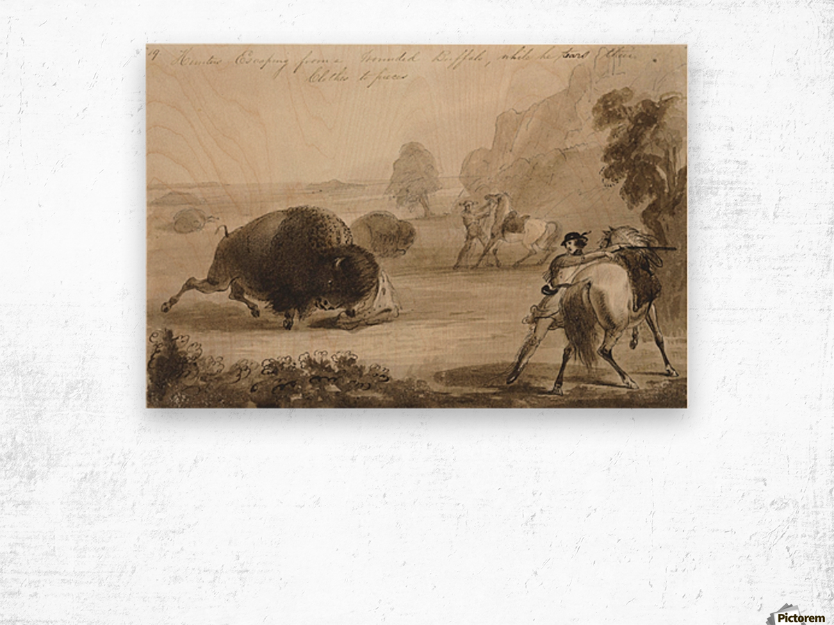 Hunters Escaping from a Wounded Buffalo, While He Tears Their Clothes to Pieces Wood print