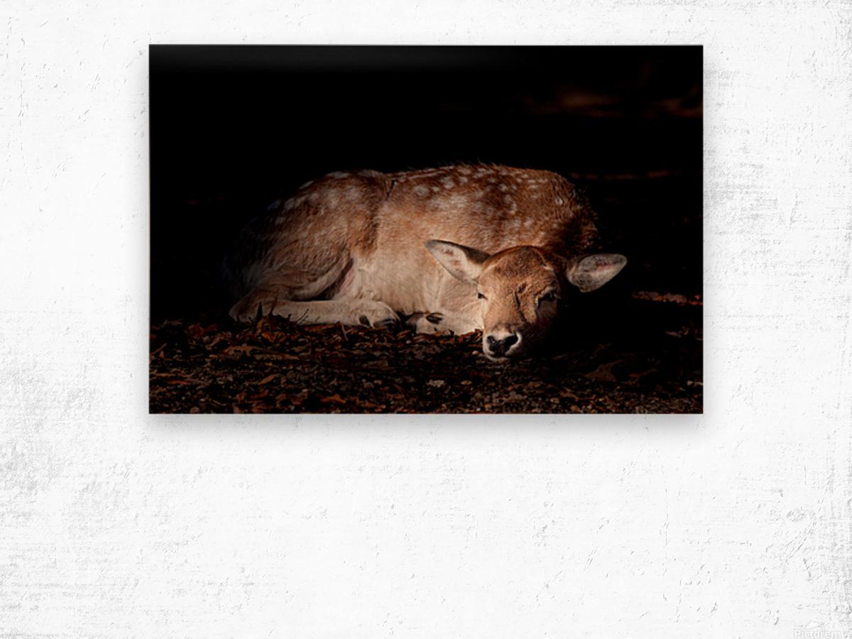 Fallow Deer 2 Wood print