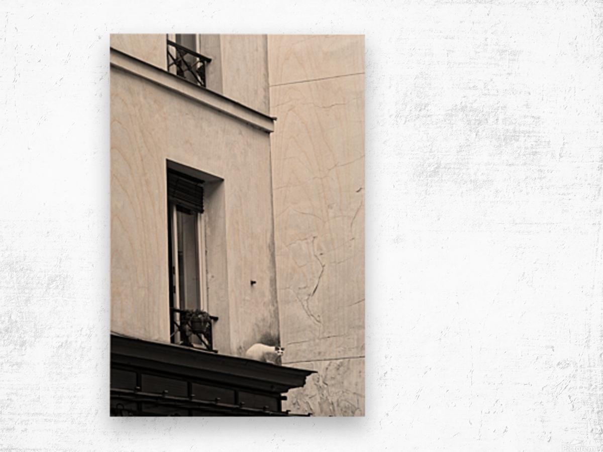 Paris cat Impression sur bois