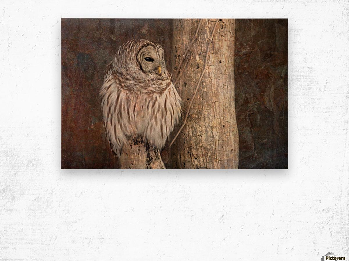 Barred Owl in Grunge Wood print