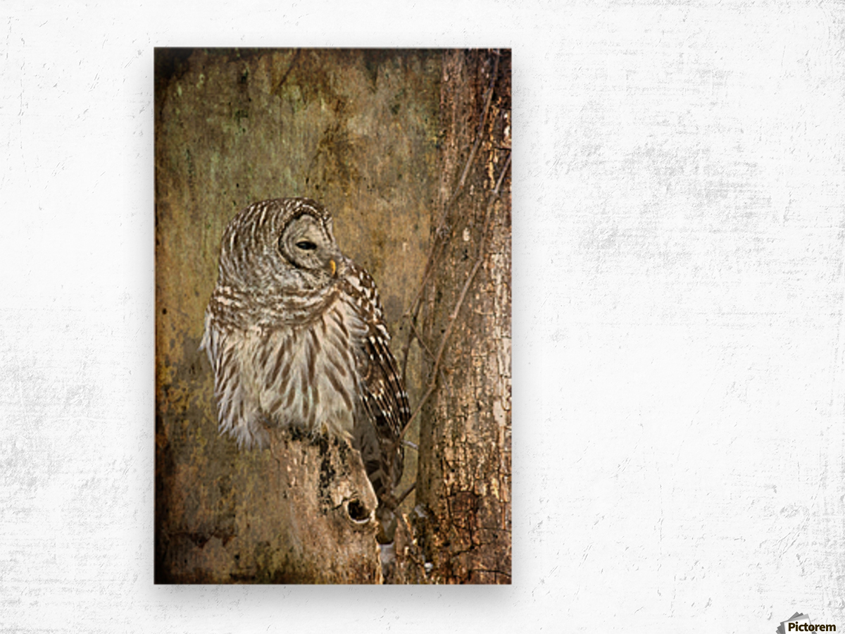 Grungy Owl Wood print