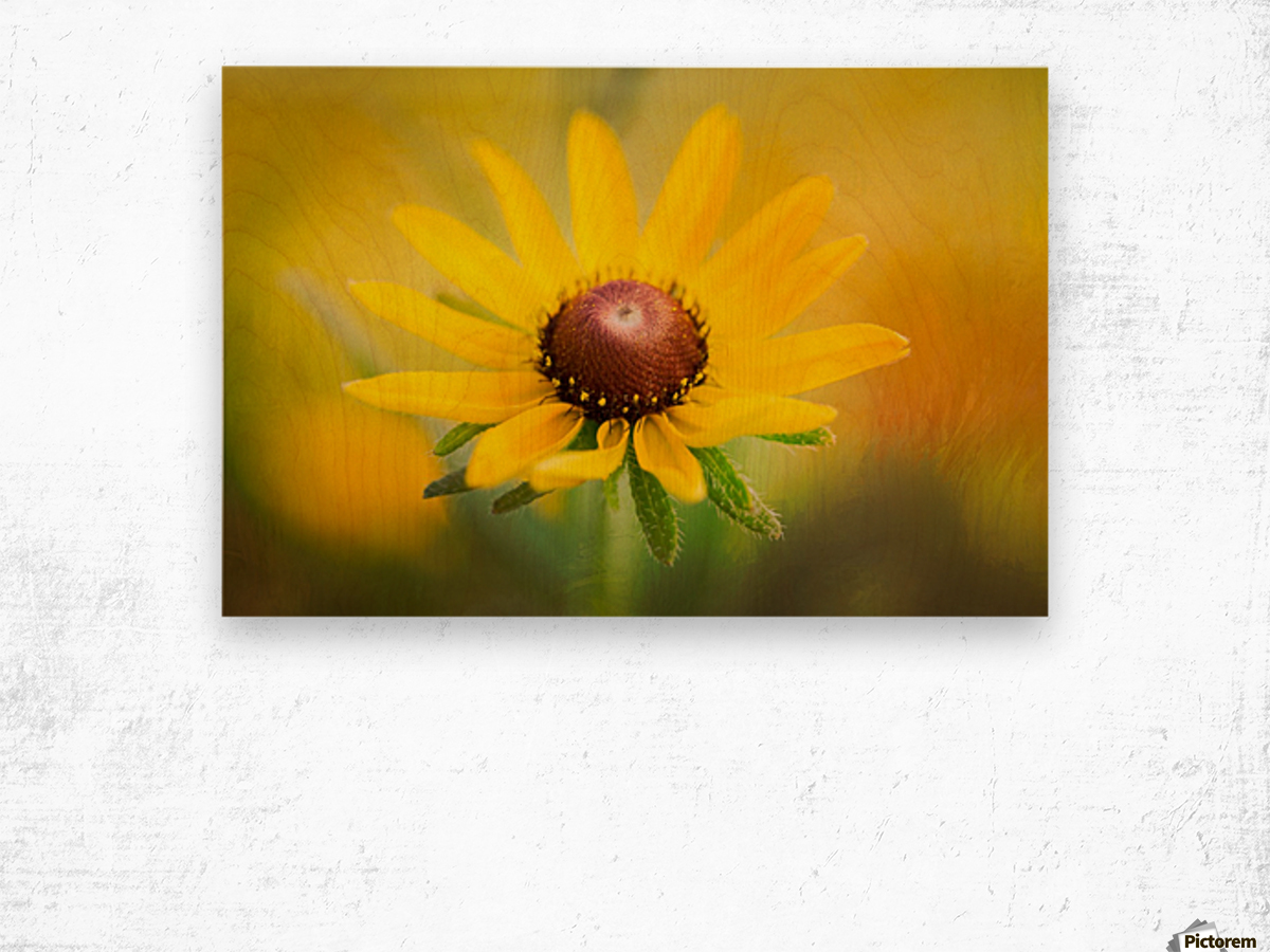 Brown Eyed Susan Wood print
