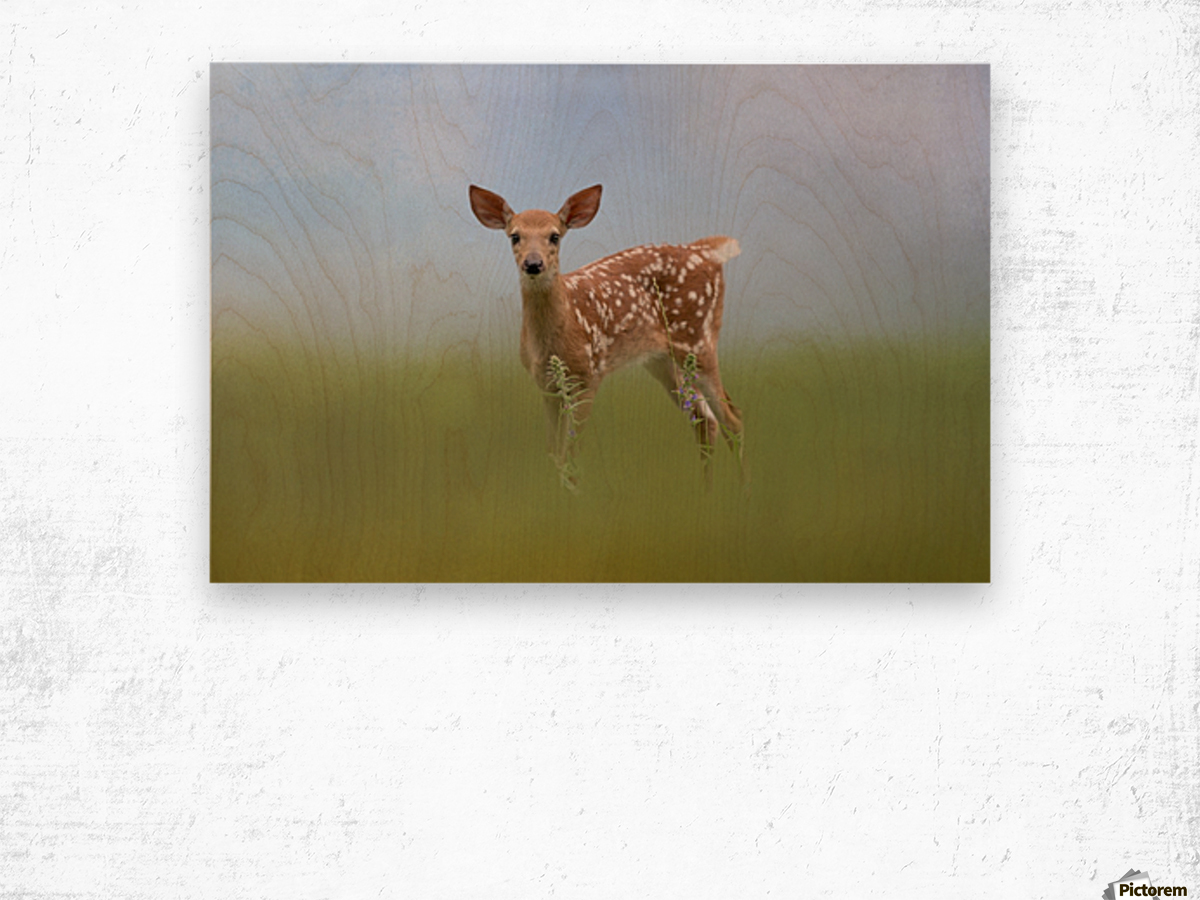 Spotty the Fawn Wood print
