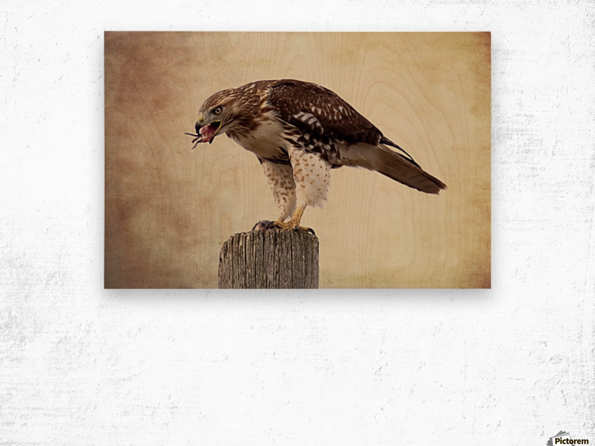 Meal Time for a Hawk Wood print