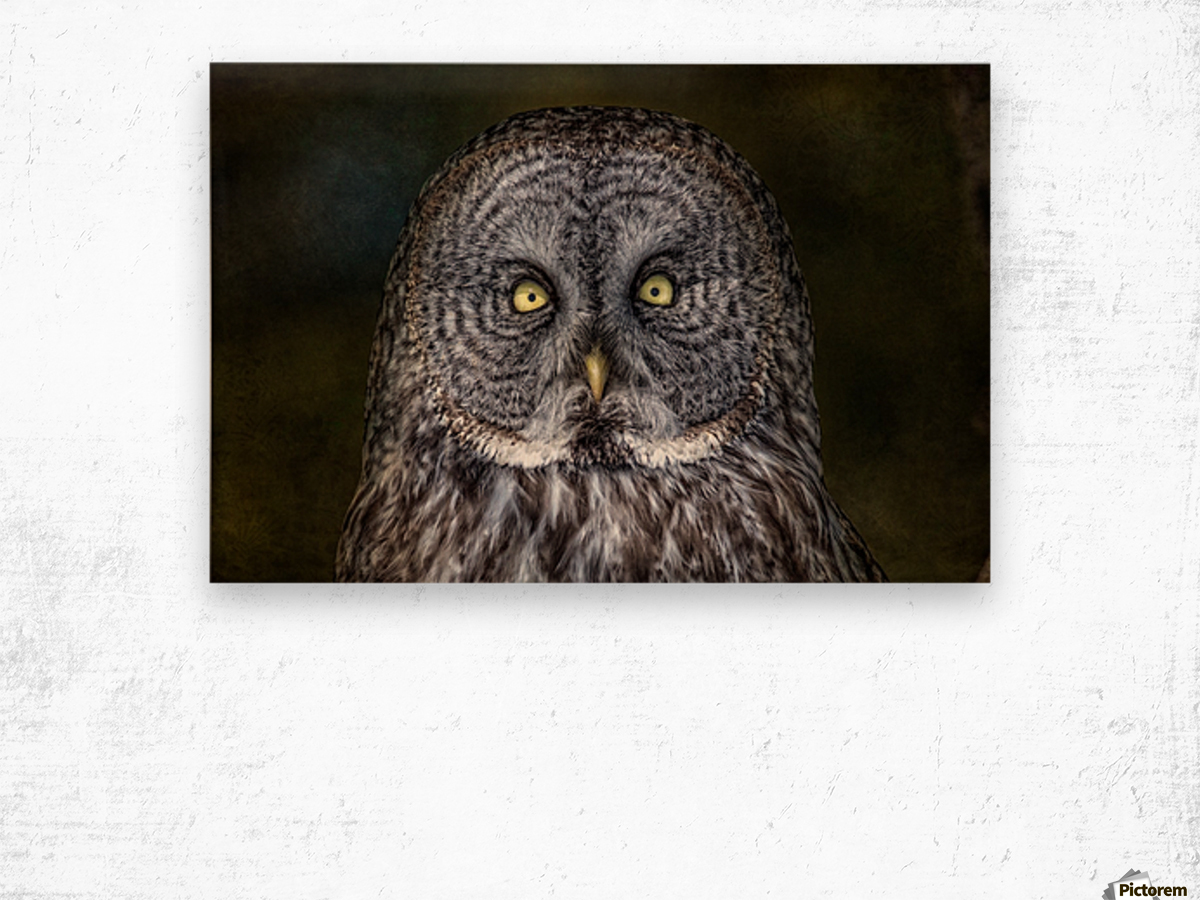 Stare Down with a Great Grey Owl Wood print