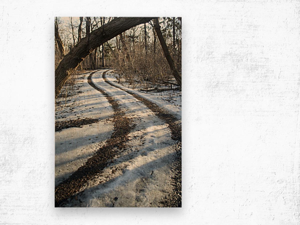 Snowy Trails Wood print