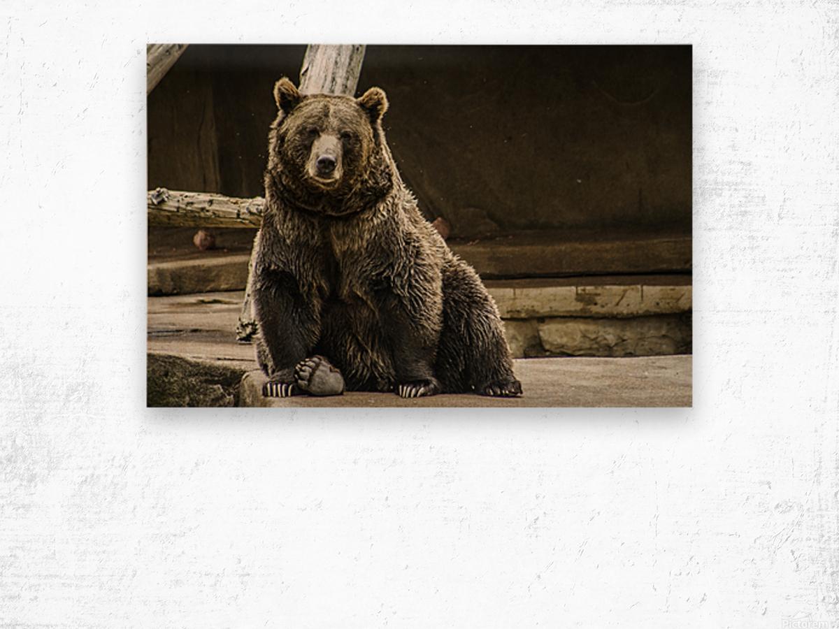 Greetings  Brown Bear  Wood print