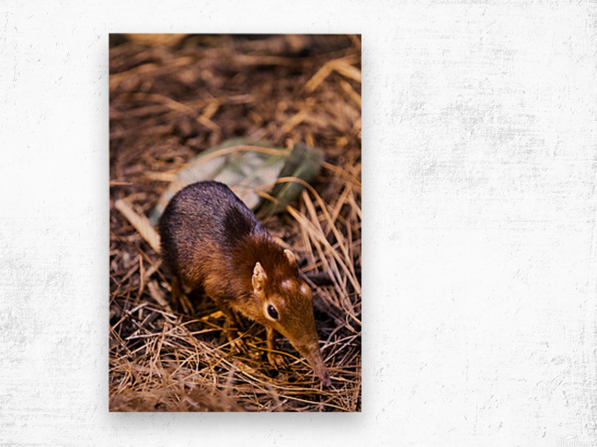Small Elephant Mouse Wood print