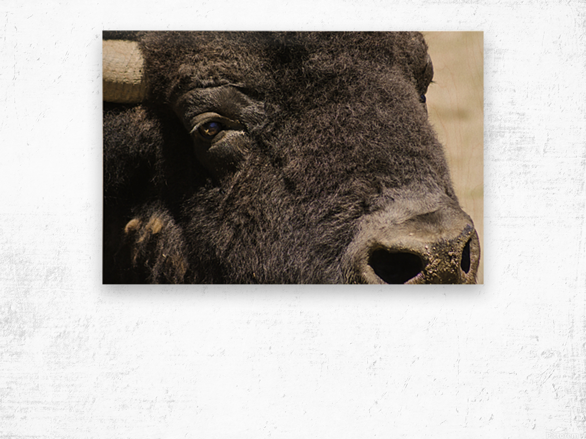Reflection of a Buffalo Wood print