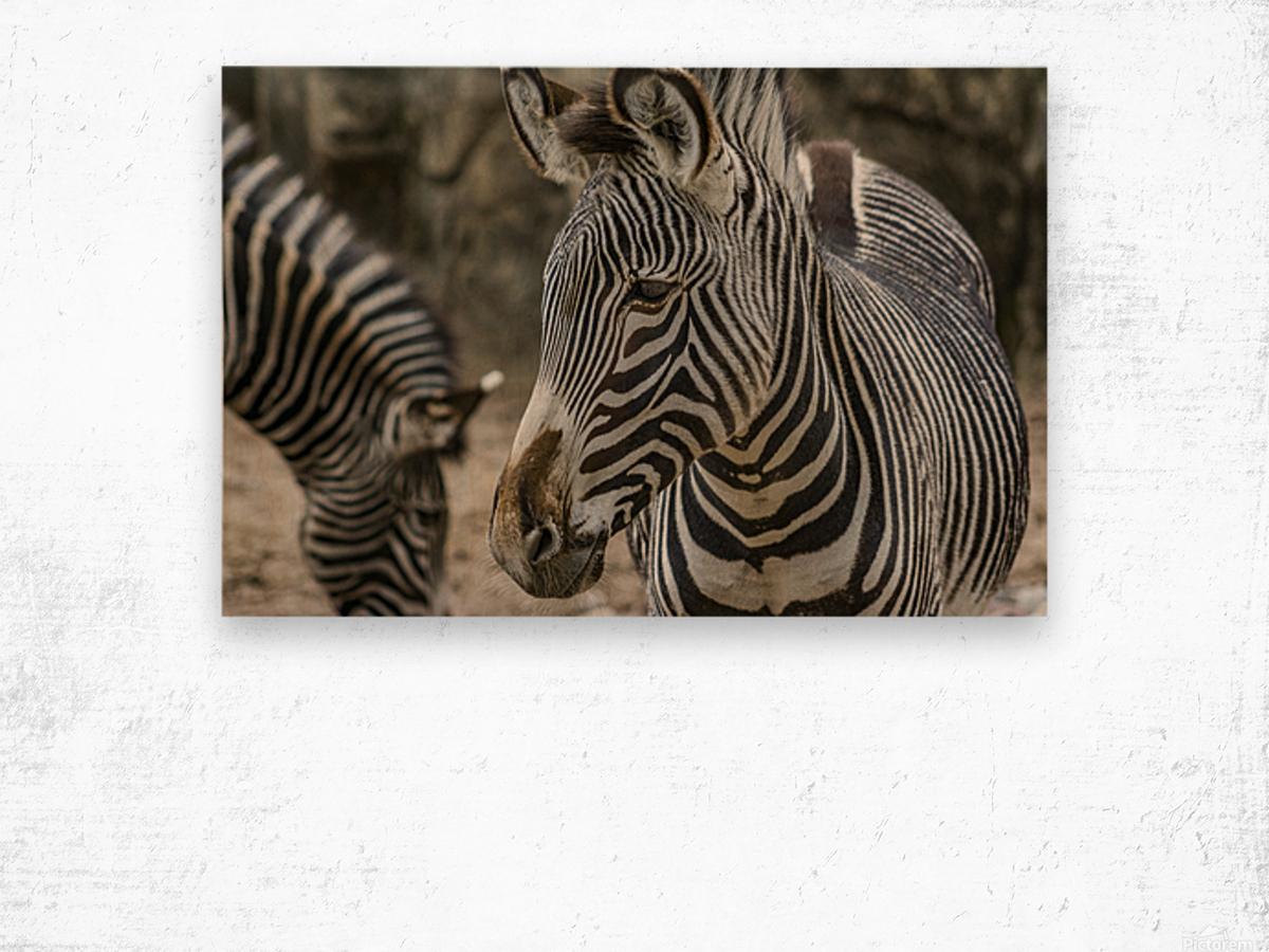 Stripes  Zebra  Wood print