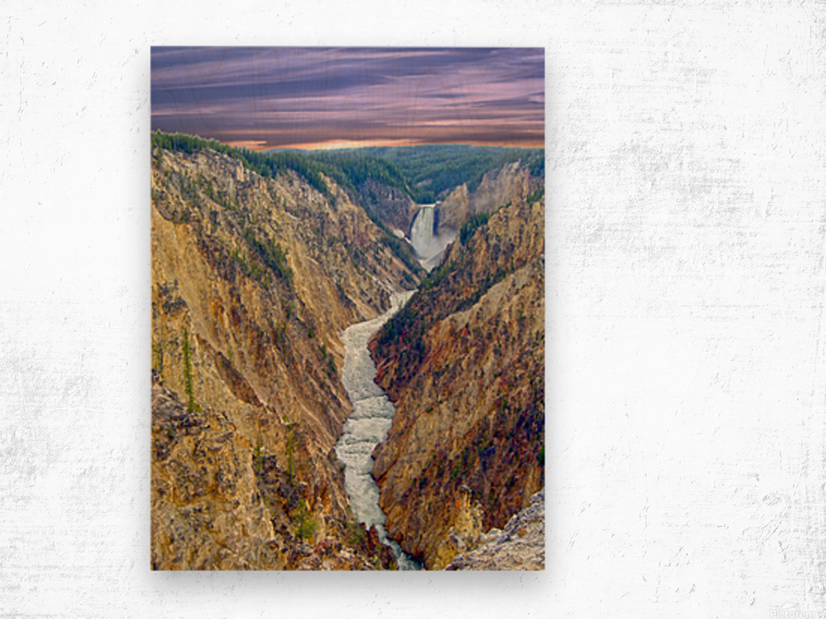 Grand Canyon of Yellowstone - The Falls and River in the Fading Light of Day  Yellowstone National Park at Sunset Wood print