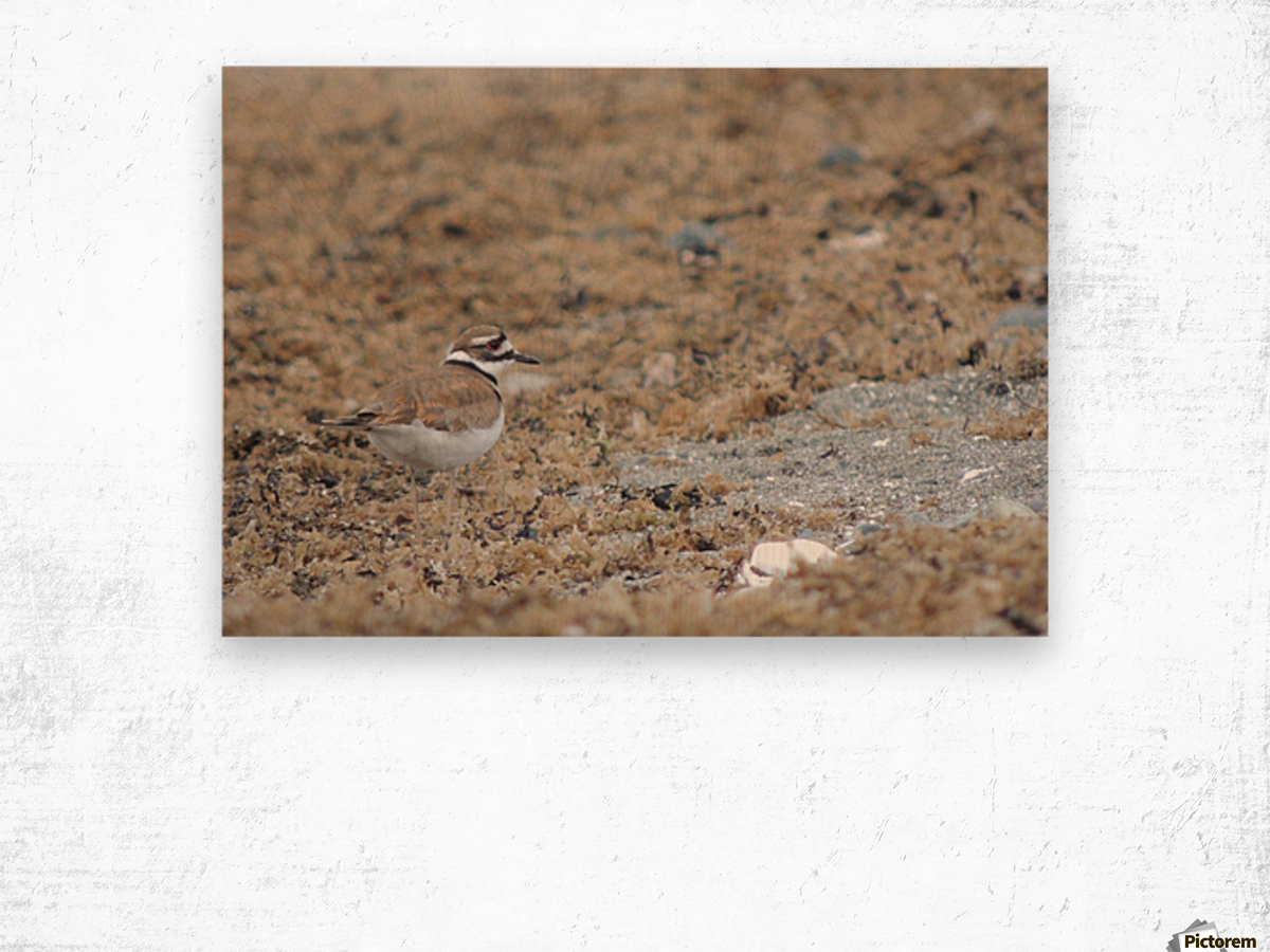 Killdeer Camouflage Wood print