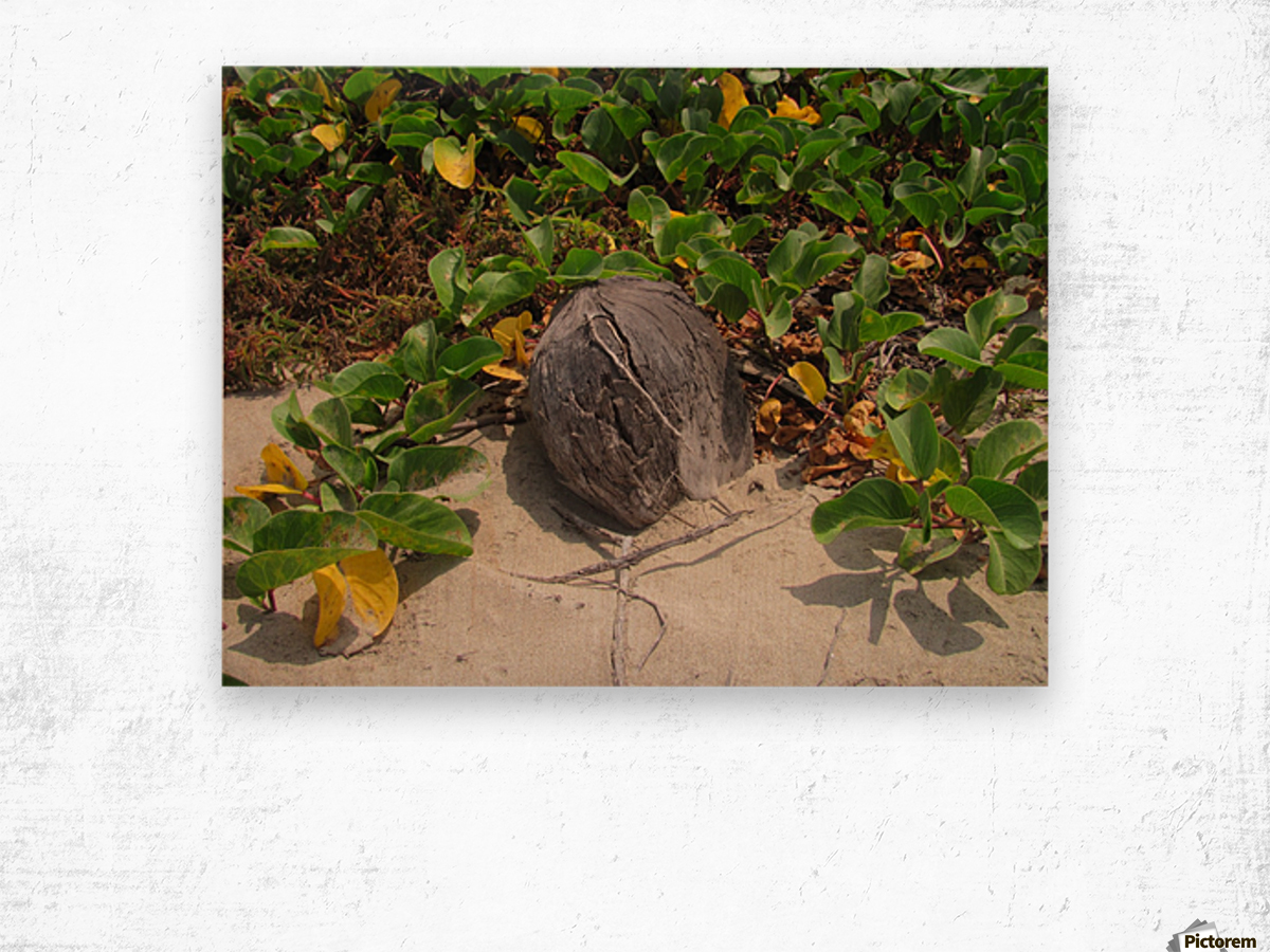 Coconut in the Sand Wood print