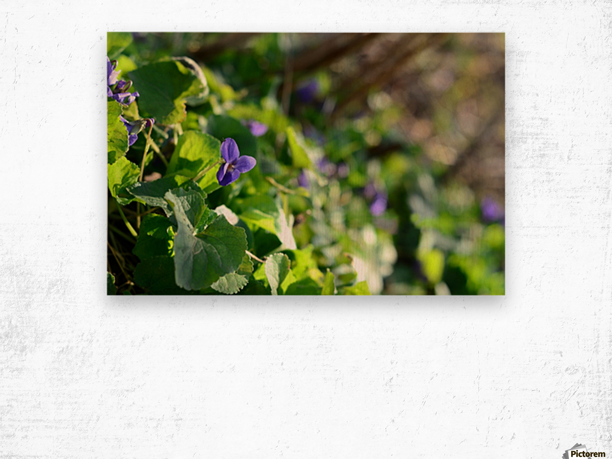 Spring sweet violets in the garden Wood print