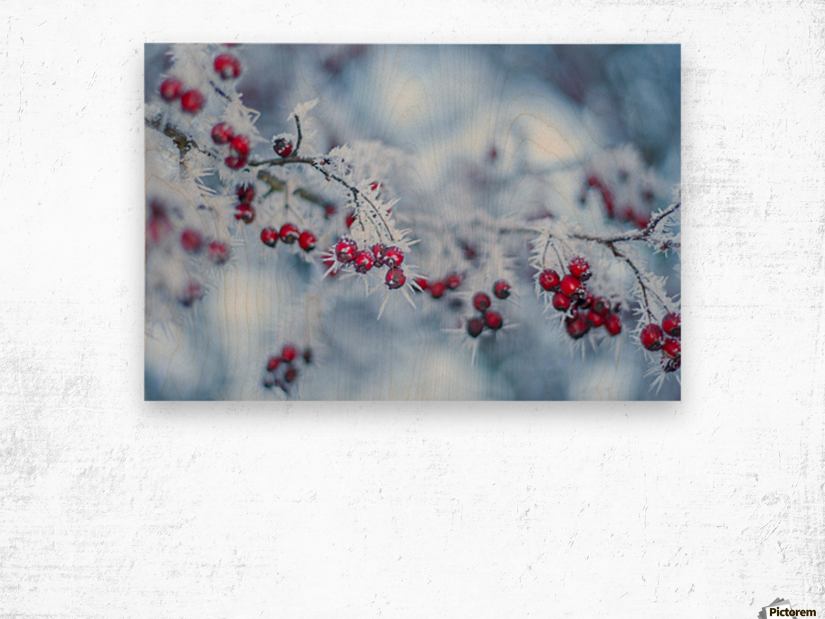 Winter flowers Wood print