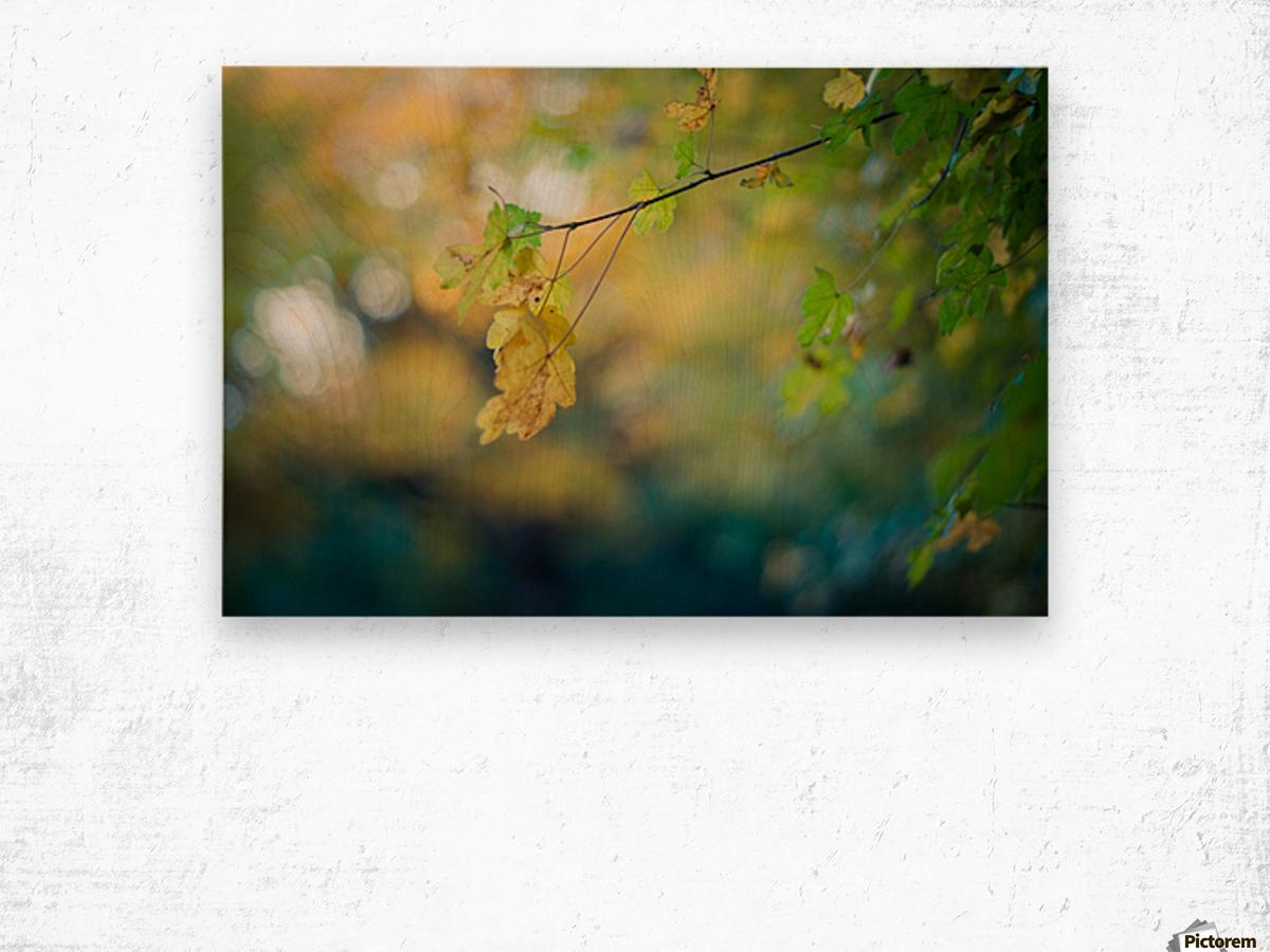 Beautiful autumn background Wood print