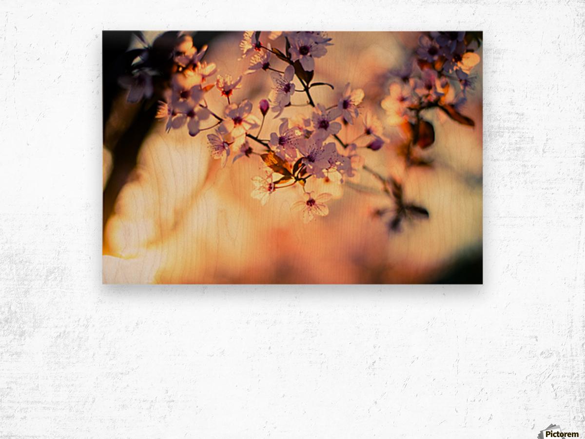 Beautiful Spring cherry flowers Wood print