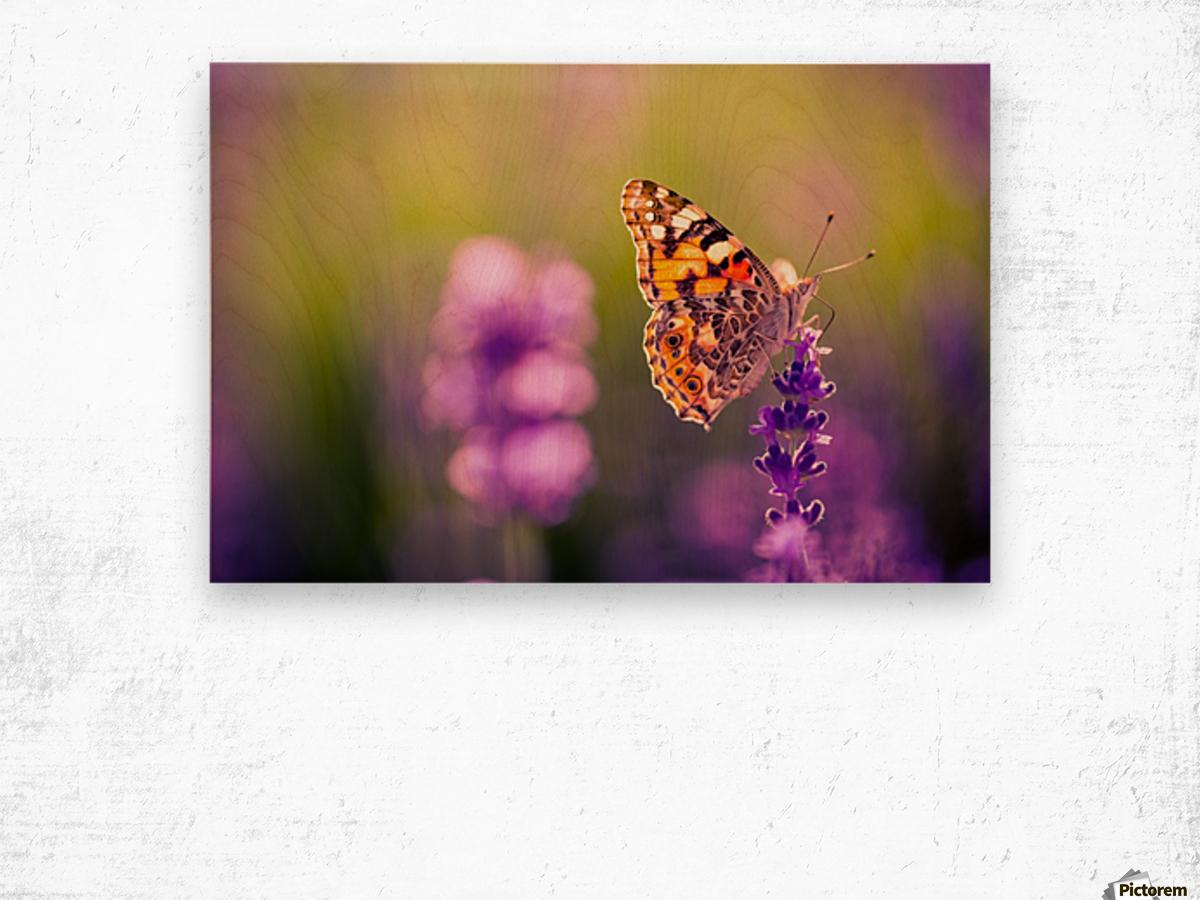 Beautiful Sunset lavender flowers Wood print