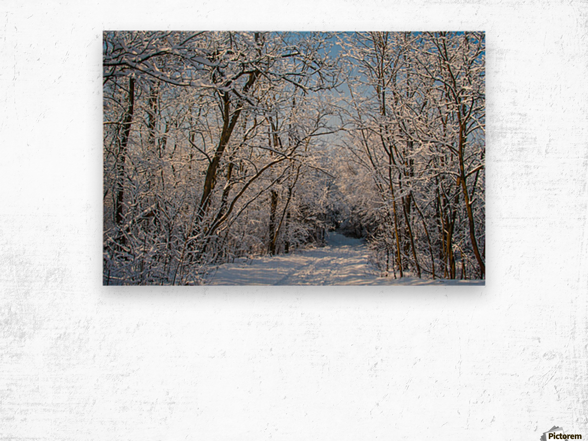 Forest covered with snow Wood print
