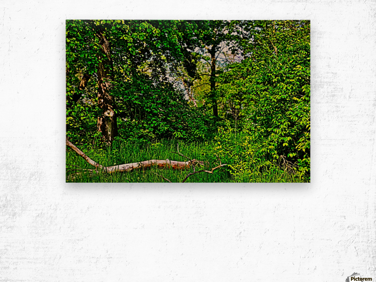 Life in the Shadows of the Trees Wood print