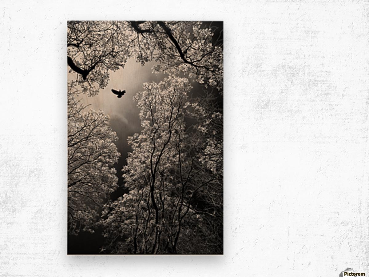 Flight Wood print