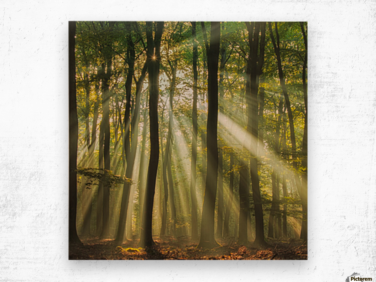 Sunny start to the day ........ Wood print