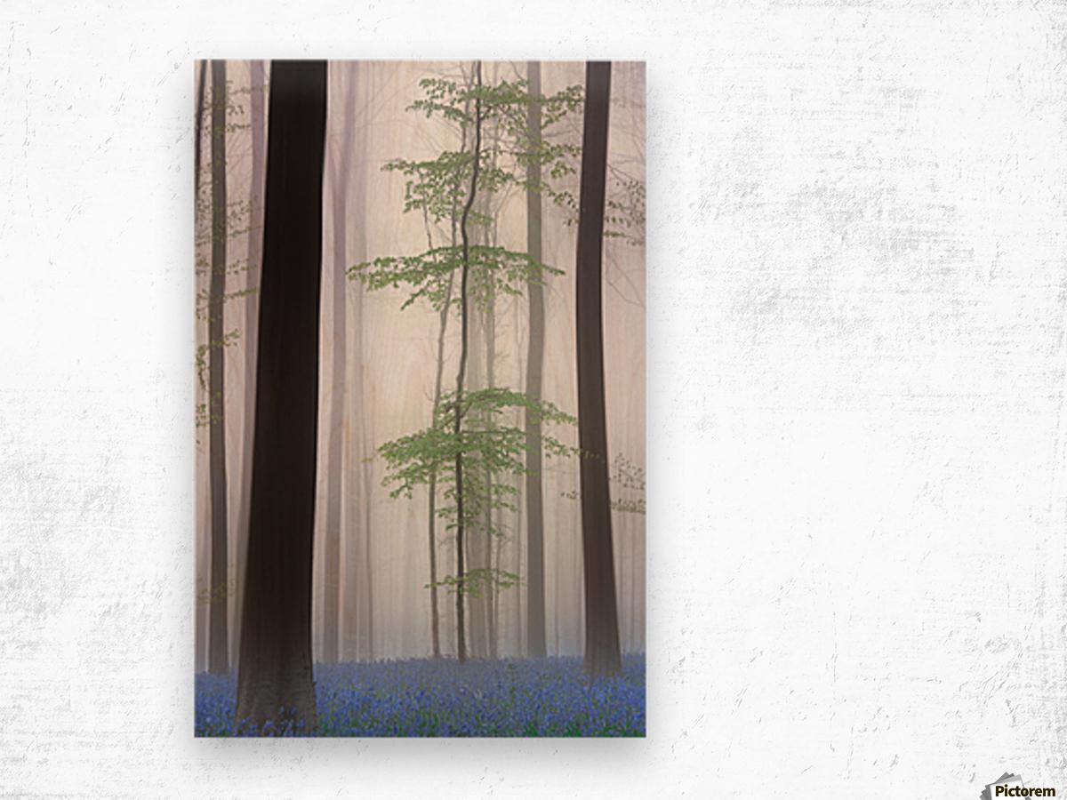 foggy forest .... Wood print