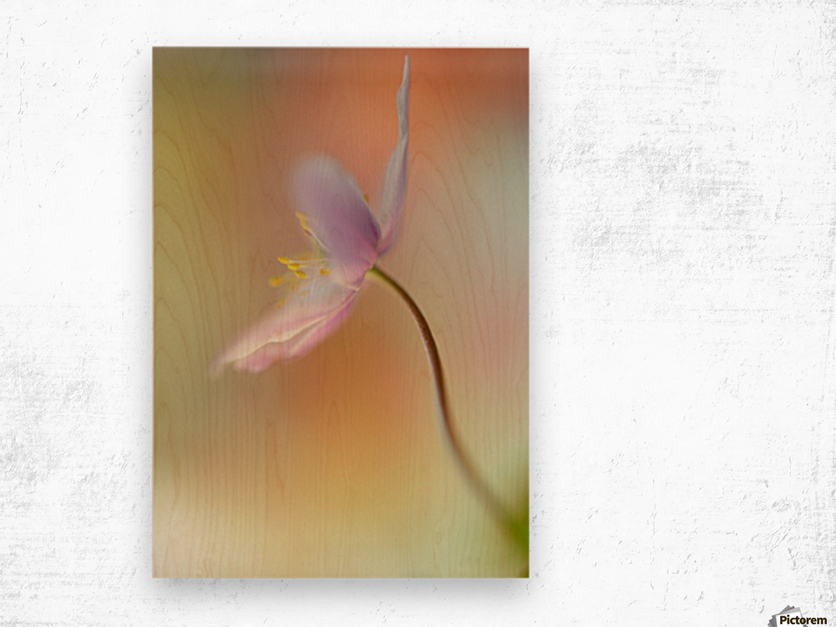 Tender spring Wood print