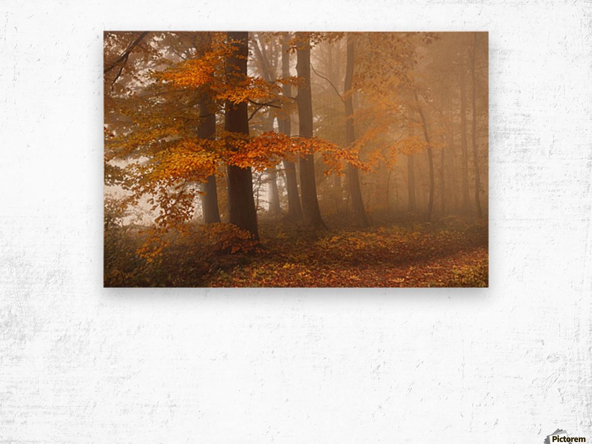 Edge of the woods Wood print