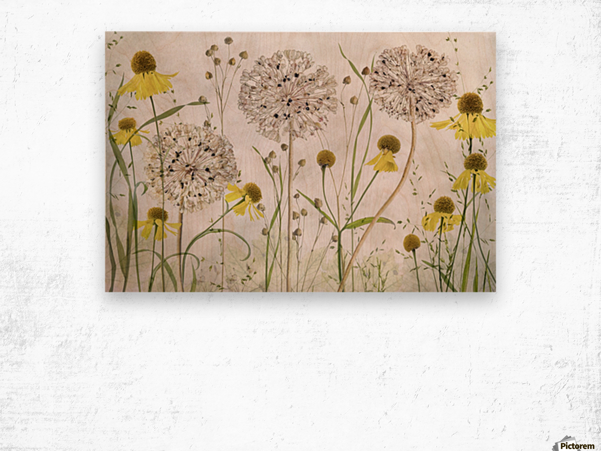 Alliums and heleniums Wood print