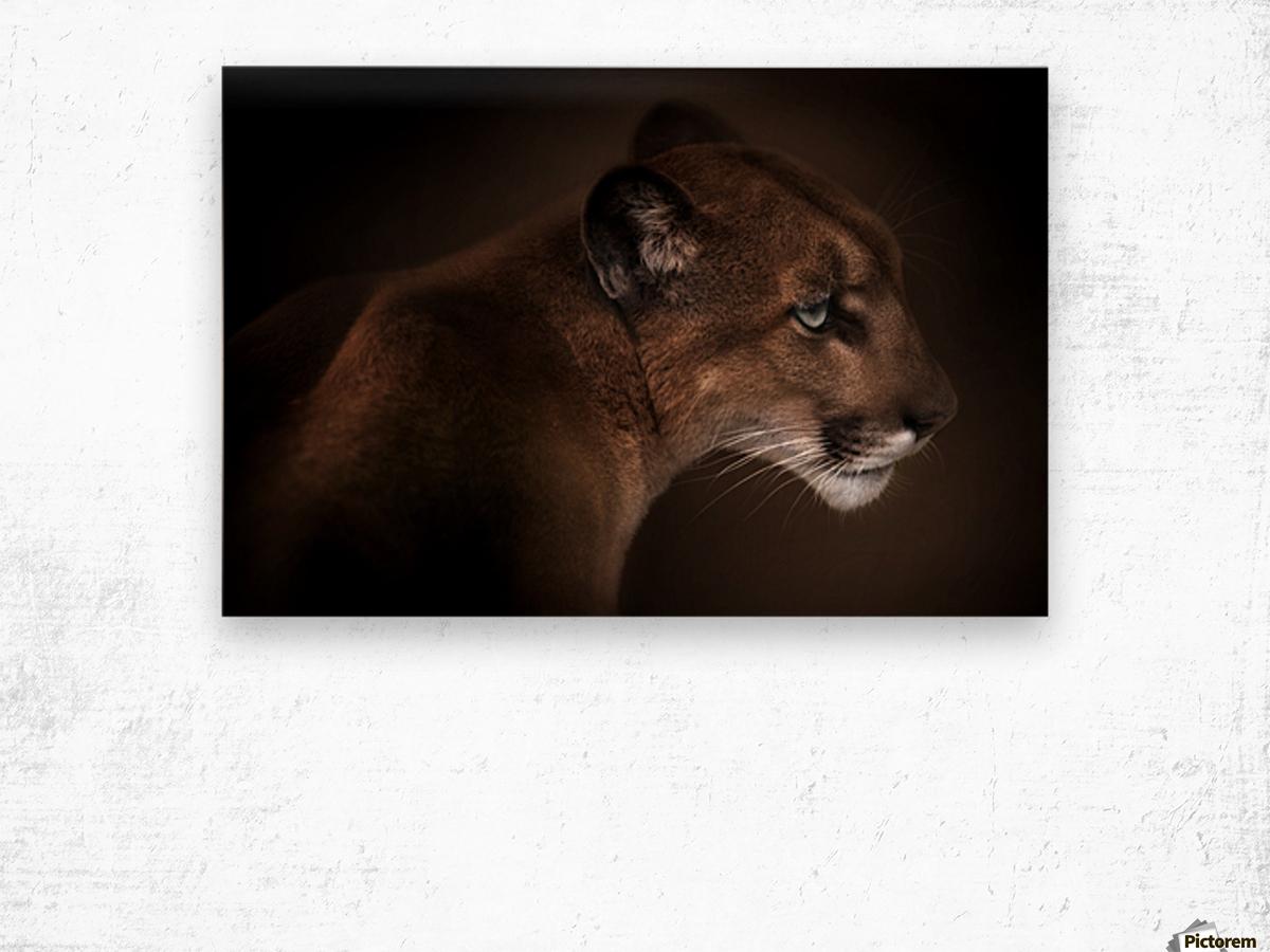 Puma Wood print
