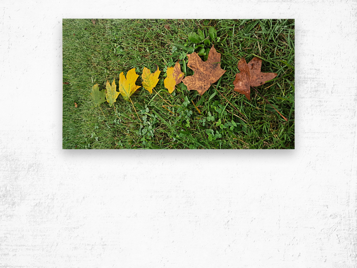 Lifespan Wood print
