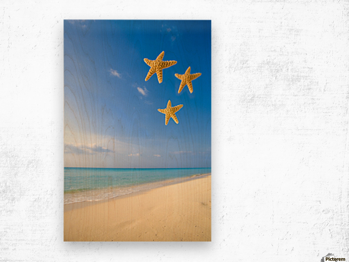 Starfish Falling In Front Of The Ocean Wood print