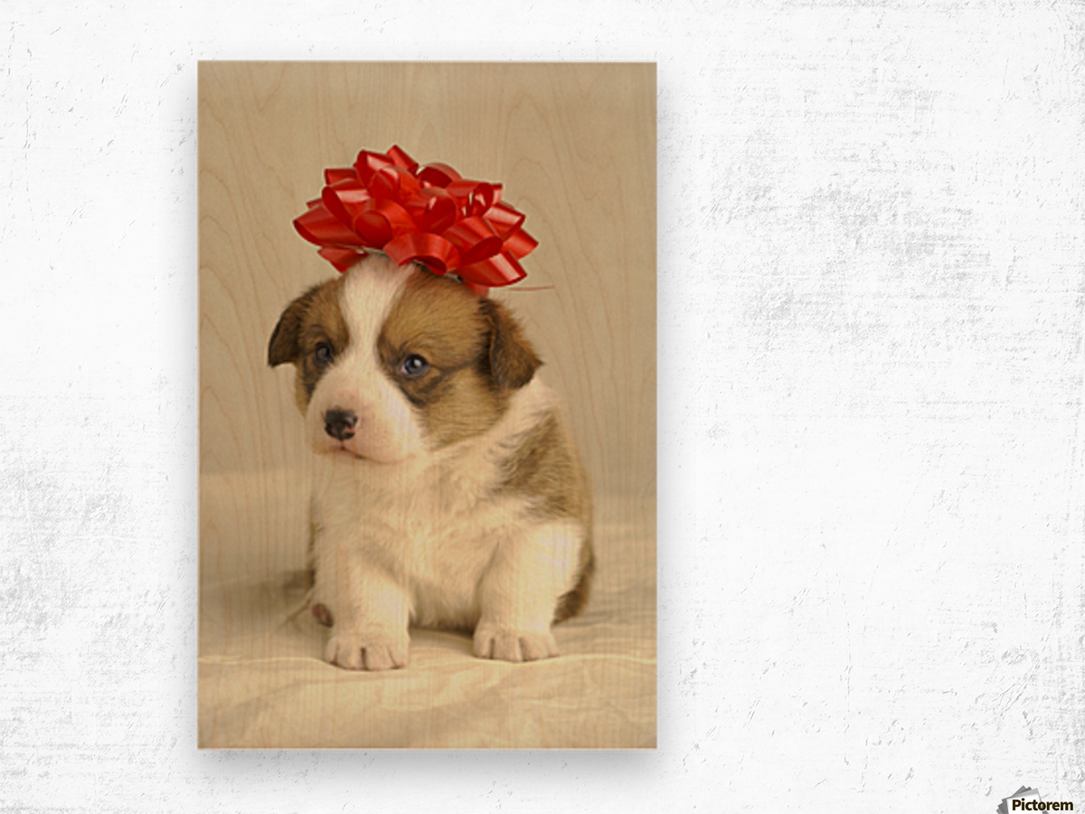 Puppy Wearing A Red Bow Wood print