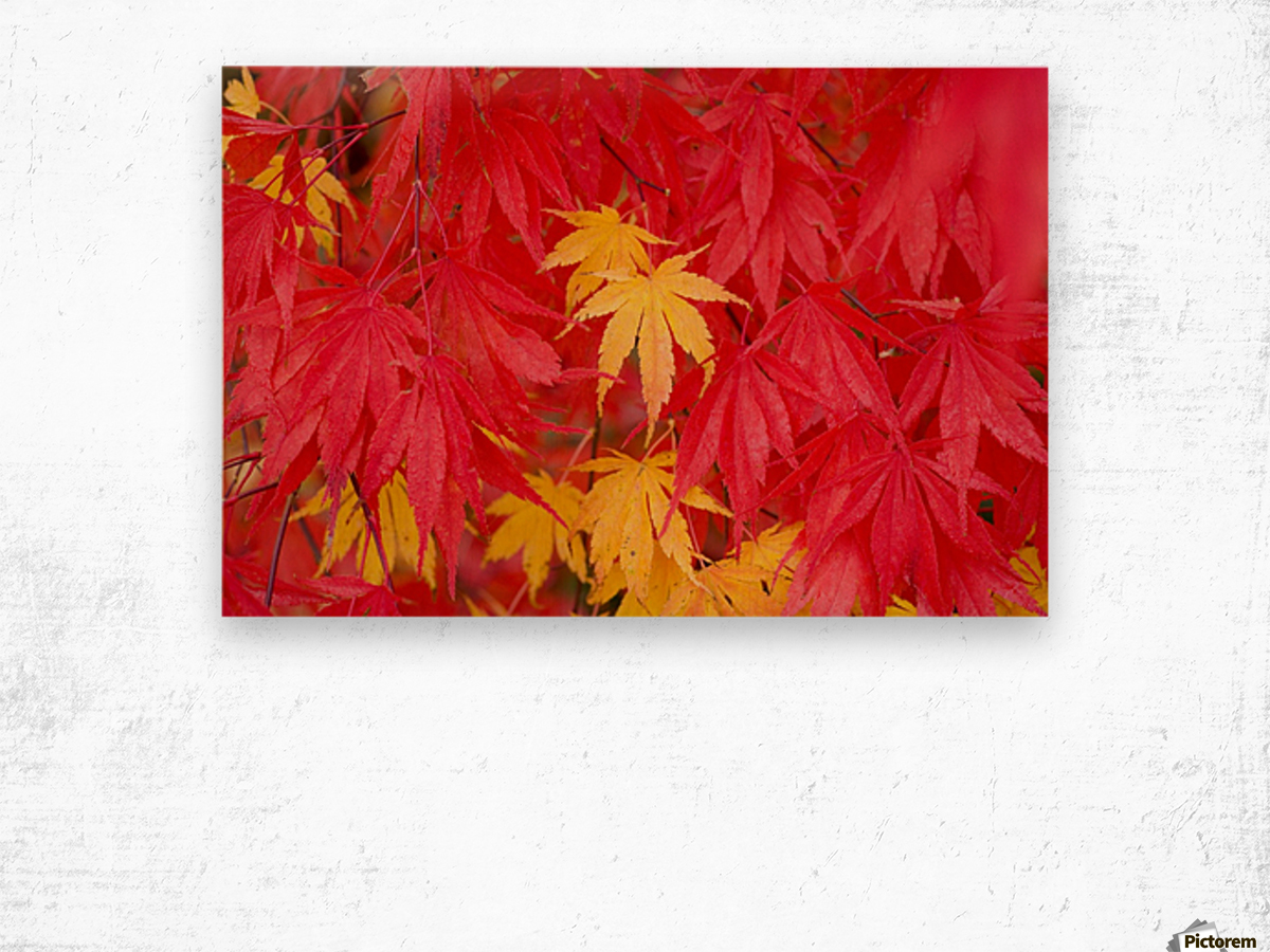Close-Up Fall Leaves Wood print