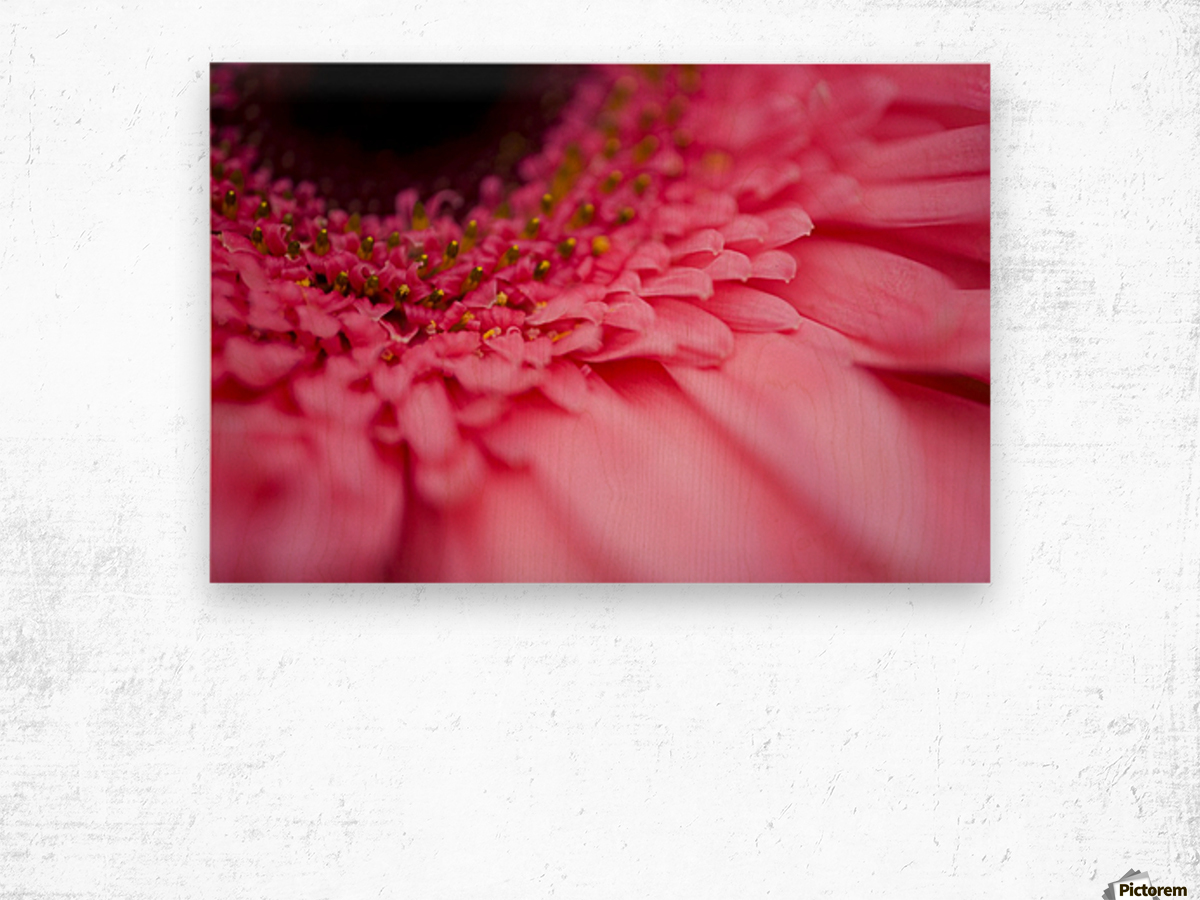 Close Up Of A Pink Flower Wood print