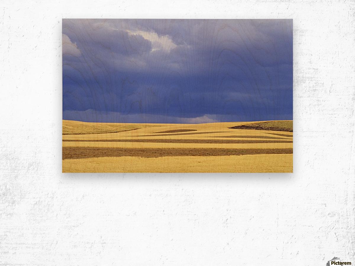 Wheat Fields Near Hermiston, Oregon, Usa Wood print