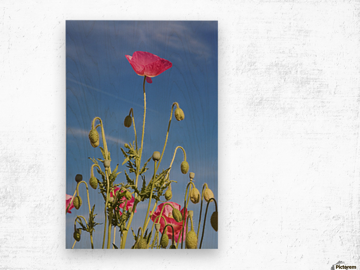 Red Flower Against Blue Sky Wood print