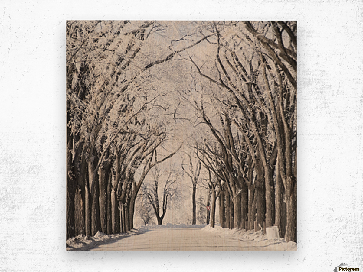 Winnipeg, Manitoba, Canada; A Road And Trees Covered In Snow In Winter Wood print
