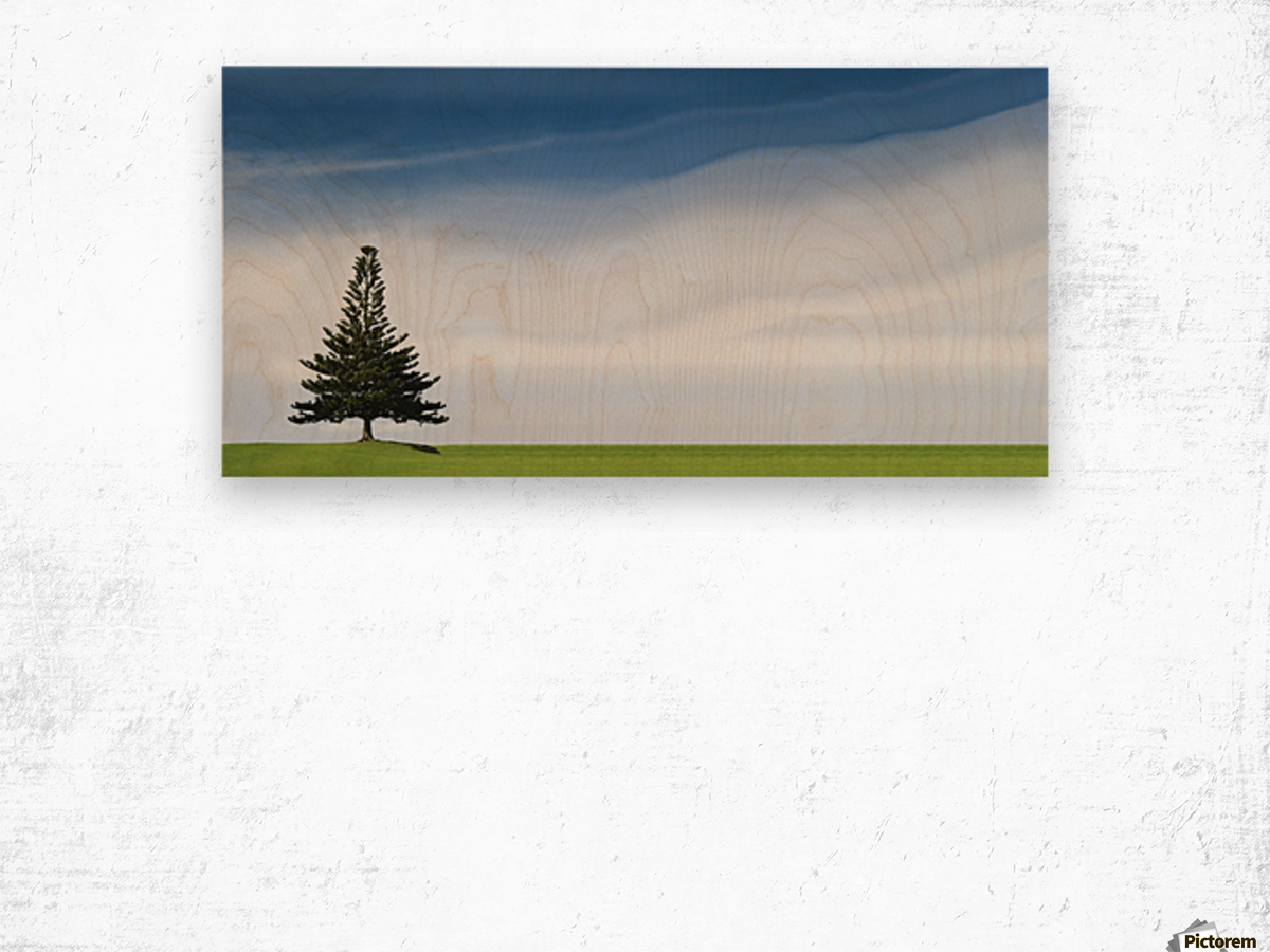 A Coniferous Tree Standing Alone In A Field Wood print